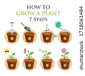 7 steps growth of plant in pot  ...   Shutterstock .eps vector #1718061484