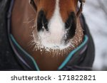 close up of bay horse nuzzle in ... | Shutterstock . vector #171822821