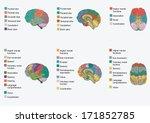 human brain anatomy  function... | Shutterstock .eps vector #171852785