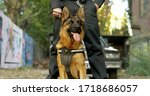 Police Officer With His German...