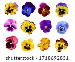 Pansy flowers on white...
