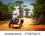 zebu cart on a dry road leading ... | Shutterstock . vector #171876671