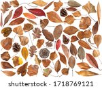 Big Collection Of Dry Leaves...