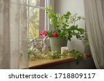 On A Light Brown Windowsill Are ...