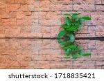 Green Plant Growing On Brick...