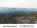 Fire Destroys Trees And Forest...