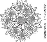 hand drawn protea bouquet top... | Shutterstock .eps vector #1719020554