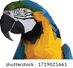 Blue And Gold Macaw Bird.