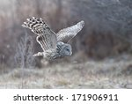 Ural Owl Flying Near A Forest.