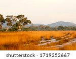 View Of Golden Grassland And...