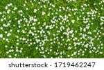 Surface Of Green Grass With...