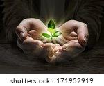 plant light in the hands ... | Shutterstock . vector #171952919