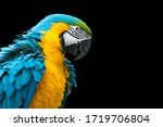 Blue And Yellow Macaw Isolated...