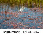 Red Pond Weed. Red Tarns ...