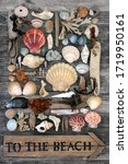 Holiday Concept With Seashell ...