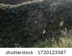 Spider Web Hanging On The Grass....