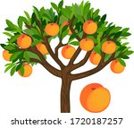 peach tree with green leaves... | Shutterstock .eps vector #1720187257