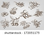 berry. set of vector sketches | Shutterstock .eps vector #172051175