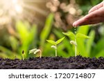 Growing Crops On Fertile Soil...