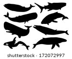 set of whale silhouettes. vector | Shutterstock .eps vector #172072997