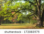 beautiful autumn foliage in the ... | Shutterstock . vector #172083575