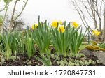 Raised Flower Bed In The...