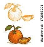Illustrations Of Tangerine In...