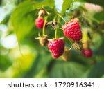 Natural Food   Fresh Red...