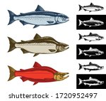vector salmon fish icons... | Shutterstock .eps vector #1720952497