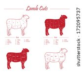lamb meat cuts   red on white   Shutterstock .eps vector #172095737