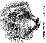 head of shaggy dog   Shutterstock .eps vector #172114751