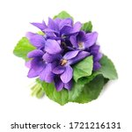 Wild Violet Flowers Isolated O...