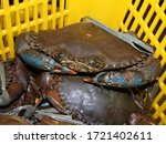 Mud Crab Being Sold In A Wet...