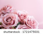 Pink Rose And Many Space .
