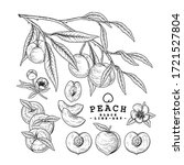vector sketch peach decorative... | Shutterstock .eps vector #1721527804