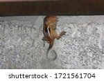 Baby Squirrel On The Outer Wall