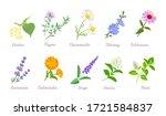medical herbs set. vector flat... | Shutterstock .eps vector #1721584837