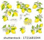 lemon tree branch with yellow...   Shutterstock .eps vector #1721681044
