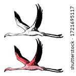 Drawing Of Flying Flamingo....