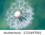 white fluffy dandelions ... | Shutterstock . vector #1721697001