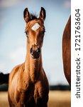Sweet Little Horse Foal...