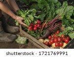farmer folding fresh vegetables ... | Shutterstock . vector #1721769991