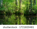 Cypress Knees Can Be Seen In A...