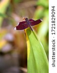 A Dragonfly With A Red Pattern...