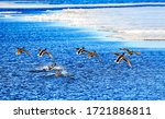 Ducks Fly Over Water Surface
