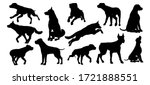 a set of detailed animal... | Shutterstock . vector #1721888551