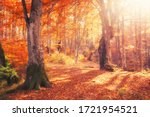 Sunrise In Autumn Forest....