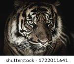 Eyes Of A Tiger  Black...