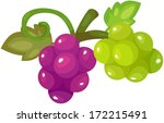 illustration of isolated grapes ... | Shutterstock .eps vector #172215491