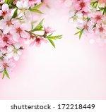 Peach Flower Blossom On Pink...
